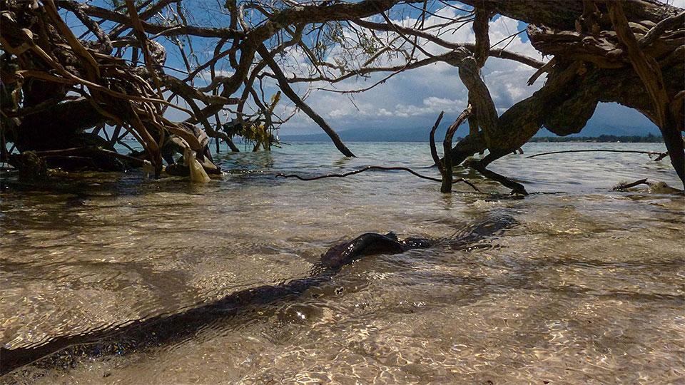 2-8-Bali-Nature-Gili-Siug
