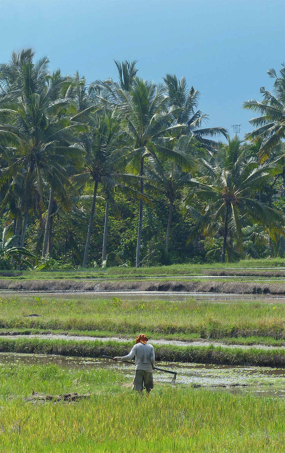 3-1-Bali-Working-RiceField1
