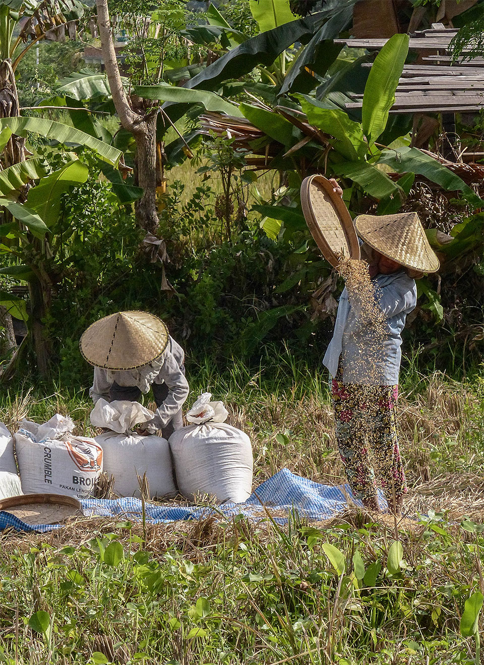3-10-Bali-Working-RiceField10