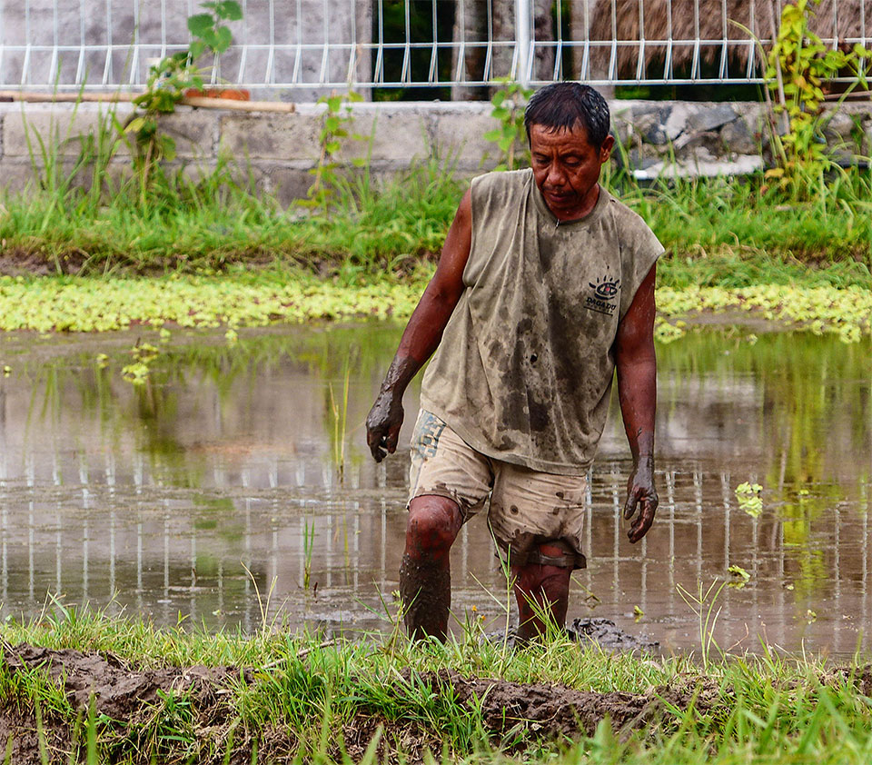 3-2-Bali-Working-RiceField2