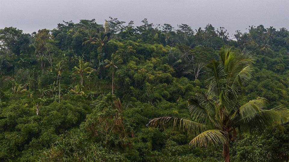 3-3-Bali-Nature