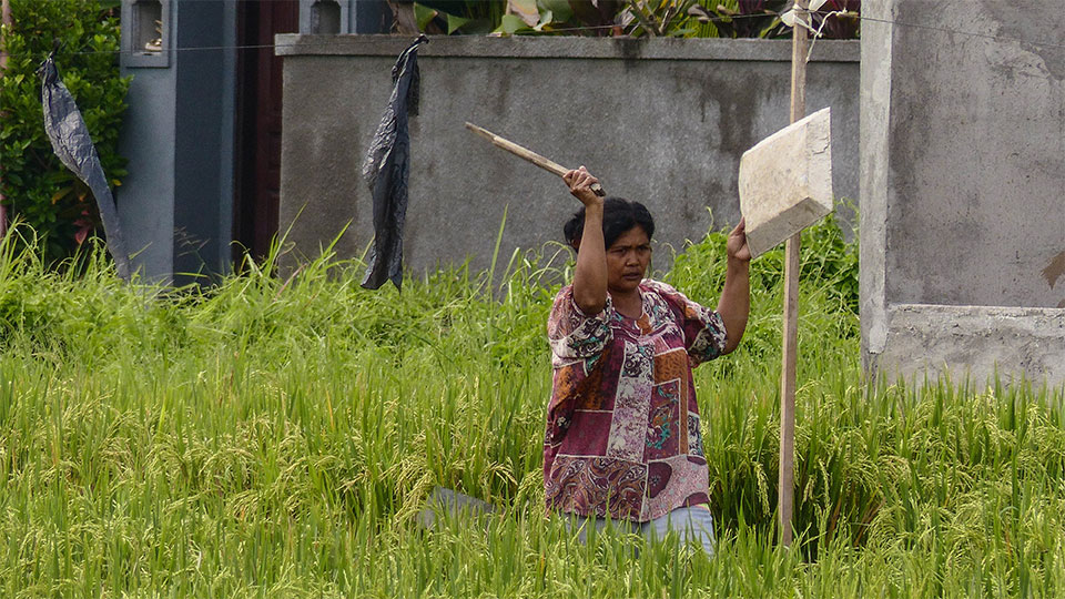3-4-Bali-Working-RiceField4