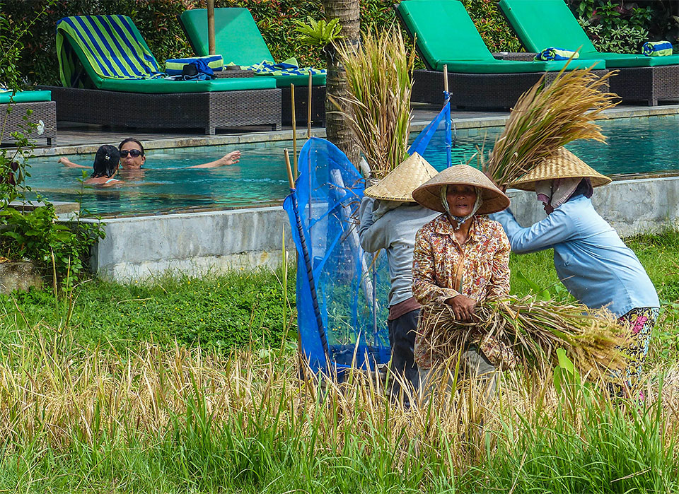 3-6-Bali-Working-RiceField6