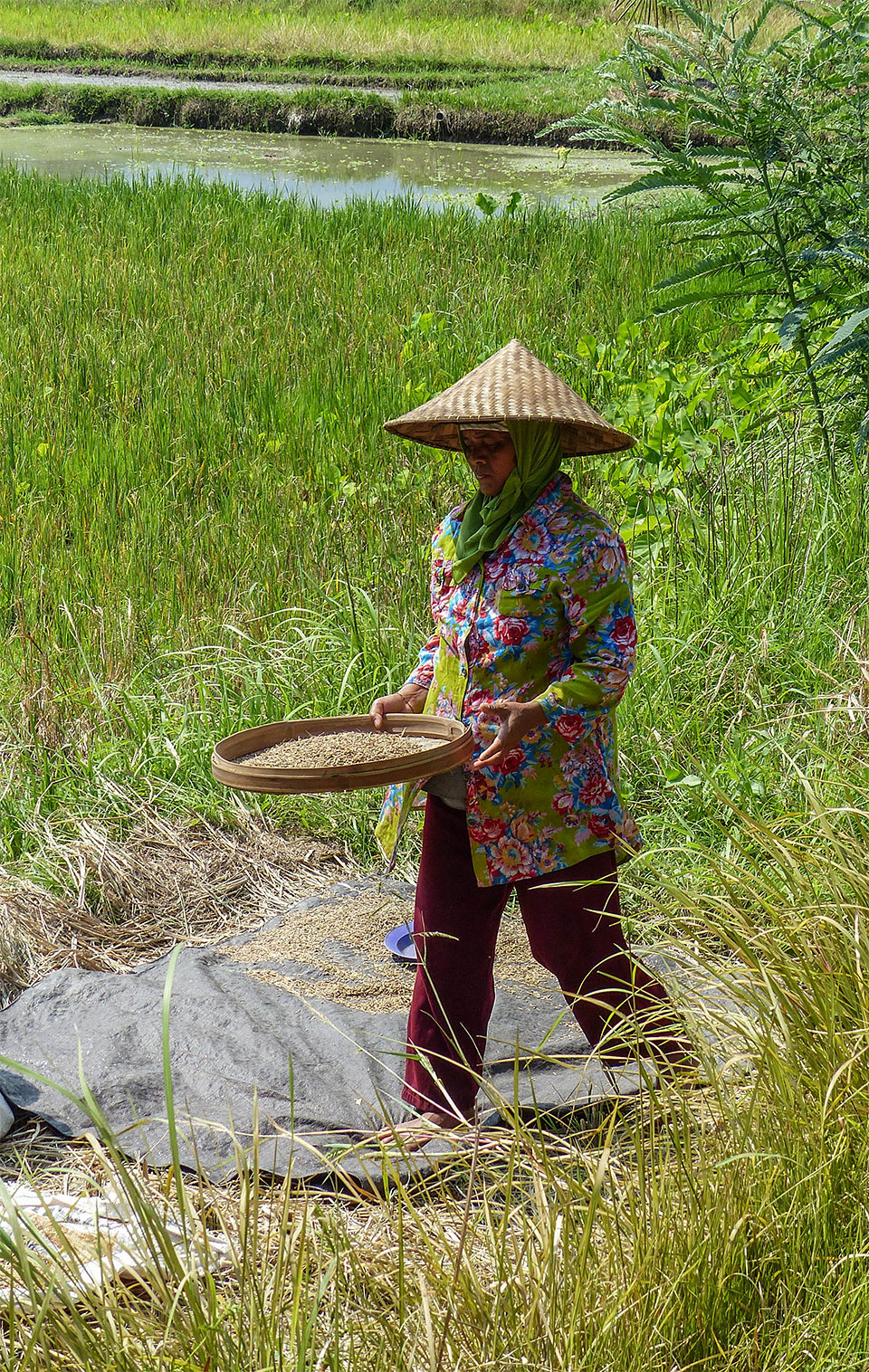 3-7-Bali-Working-RiceField7