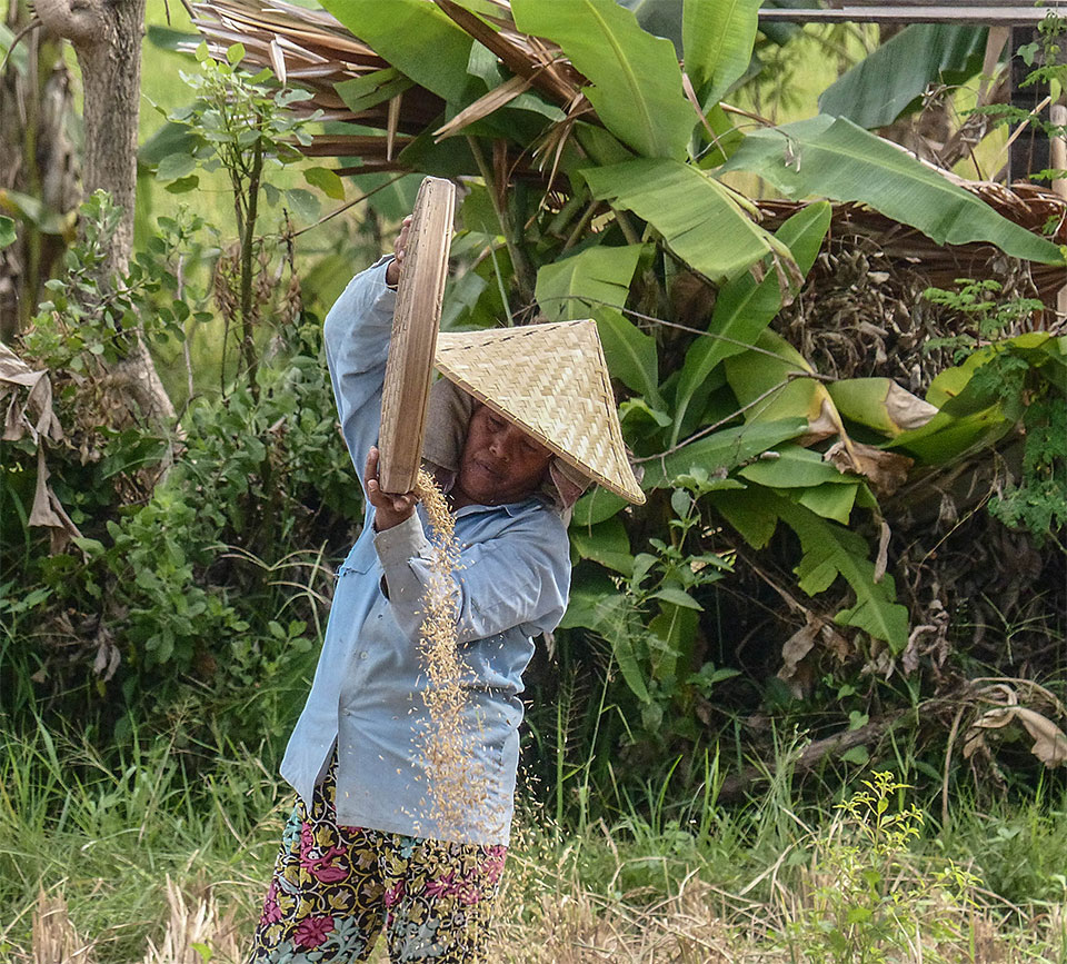 3-9-Bali-Working-RiceField9