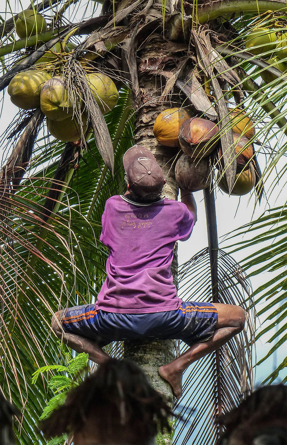 4-8-Bali-Working-GettingCoconut